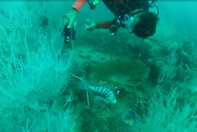 lionfish (Copy)