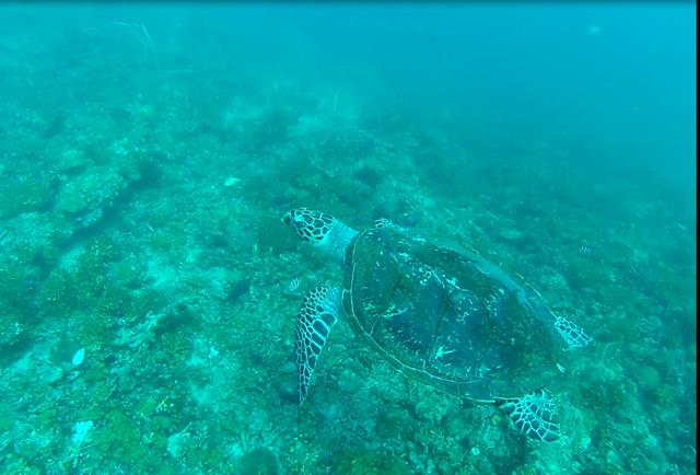 Turtle7 (Copy)