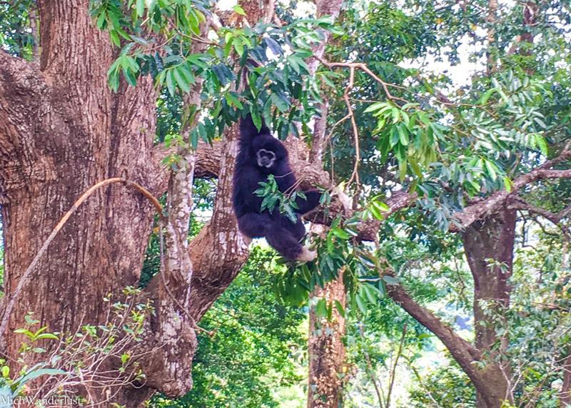 Chiang Mai Ziplining - Flight of the Gibbon