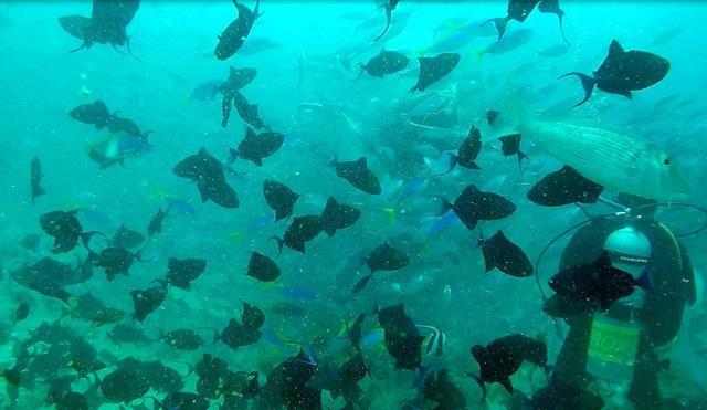 Fiji shark dive