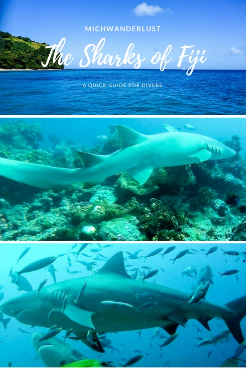 Sharks of Fiji - A guide to these awe-inspiring sharks | Bull sharks, tawny nurse sharks, lemon sharks, silvertip sharks and more | Diving in Fiji | MichWanderlust