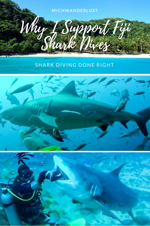 Fiji Shark Dives - why I support them | Shark Conservation | Marine Conservation | Sustainable tourism | MichWanderlust