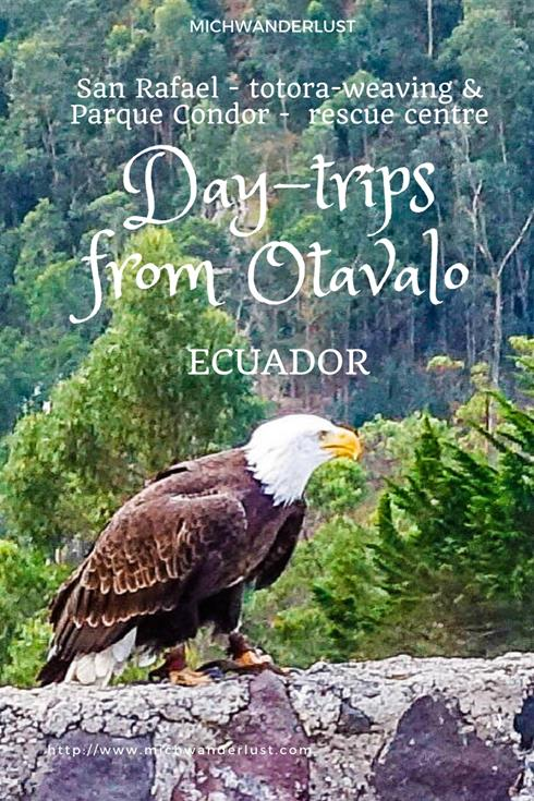 If you're visiting Otavalo, Ecuador, be sure to check out the indigenous San Rafael community which specialises in totora products and the Parque Condor, a bird rescue centre | Ecuador | MichWanderlust