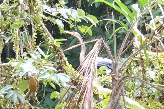 Cuyabeno Nature Reserve, Ecuador