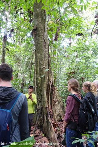 Jungle walk with Nicky Lodge, Cuyabeno Nature Reserve, the Amazon, Ecuador