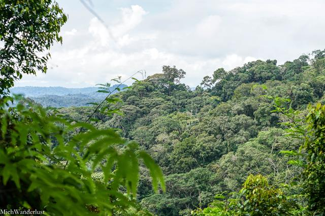 Hike through Amazon rainforest with Liana Lodge, Ecuador