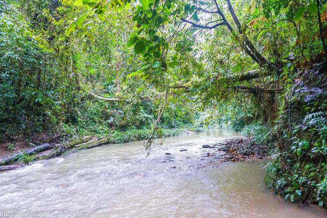 Rio Rodriguez, hike through Amazon rainforest with Liana Lodge, Ecuador