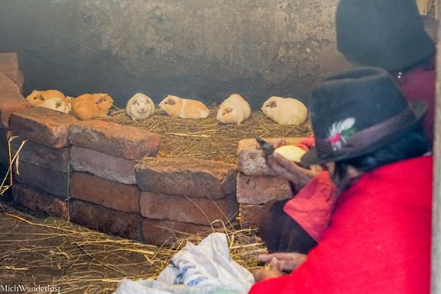 Cuy (guinea pigs), Community visit with Inti Sisa, Guamote, Ecuador